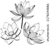 vector lotus flower. floral... | Shutterstock .eps vector #1178244886