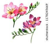 watercolor pink freesia flower. ... | Shutterstock . vector #1178245669