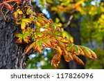 colorful leaves | Shutterstock . vector #117826096