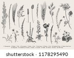 summertime. plants of fields... | Shutterstock .eps vector #1178295490
