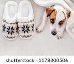 dog near to slippers under the... | Shutterstock . vector #1178300506