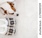 dog near to slippers under the... | Shutterstock . vector #1178300539