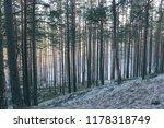 straight pine trees well...