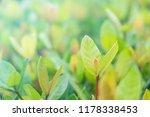 closeup nature view of green... | Shutterstock . vector #1178338453
