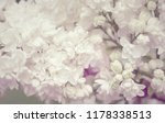 blooming white lilac flowers... | Shutterstock . vector #1178338513