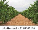 spanish orange grove  valencia | Shutterstock . vector #1178341186
