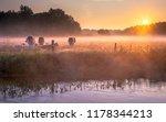 cows in the field in early...   Shutterstock . vector #1178344213