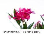 Bouquet Pink Petals Of Fragran...