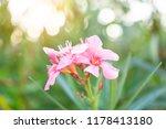 A Bouquet Soft Pink Petals Of...
