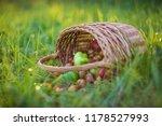 harvest vegetables in the basket   Shutterstock . vector #1178527993