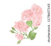 flower pink rose  green leaves. ... | Shutterstock .eps vector #1178657143