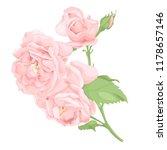 flower pink rose  green leaves. ... | Shutterstock .eps vector #1178657146