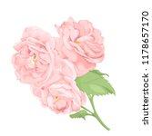 flower pink rose  green leaves. ... | Shutterstock .eps vector #1178657170