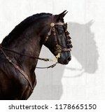 spanish stallion portrait | Shutterstock . vector #1178665150