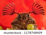 beetle sanjuanero portrait ... | Shutterstock . vector #1178748409