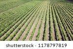 vineyards viewed from above ... | Shutterstock . vector #1178797819