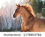 developing mane of chestnut... | Shutterstock . vector #1178803786