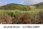 felled trees in the field  cut... | Shutterstock . vector #1178811889
