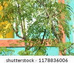 drumstick tree top stems  this... | Shutterstock . vector #1178836006