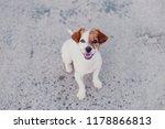 portrait outdoors of a cute... | Shutterstock . vector #1178866813