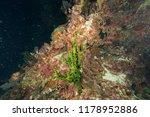 deep underwater world  | Shutterstock . vector #1178952886