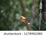 cute  tiny female cardinal bird ... | Shutterstock . vector #1178981080