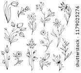 hand drawn garden herbs and...   Shutterstock .eps vector #1179025276