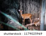 deer living with their family  | Shutterstock . vector #1179025969