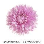 beautiful bright aster flower... | Shutterstock . vector #1179030490