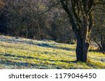naked apple tree in orchard at...   Shutterstock . vector #1179046450