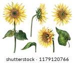 watercolor sunflowers set  hand ... | Shutterstock . vector #1179120766