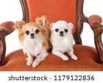 chihuahuas on armchair in front ... | Shutterstock . vector #1179122836