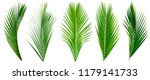 Leaf palm collection of green...