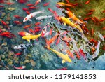 goldfish in the pond   Shutterstock . vector #1179141853