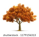 Autumn Maple Tree Isolated