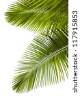 leaves of palm tree  isolated... | Shutterstock . vector #117915853
