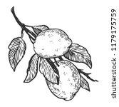 lemon citrus fruit engraving... | Shutterstock .eps vector #1179175759