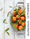 tangerines  oranges  mandarins  ... | Shutterstock . vector #1179188983