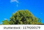 big tree with blue sky | Shutterstock . vector #1179200179