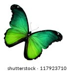 Green Butterfly On White...
