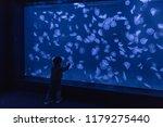little boy observing jellyfish... | Shutterstock . vector #1179275440