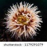 A Portrait Of A Sea Anemone
