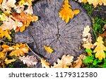autumn oak leaves on tree stump....   Shutterstock . vector #1179312580