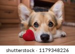 Stock photo a dog with a red heart valentine s day 1179348226