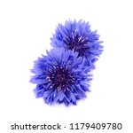 blue cornflower herb isolated... | Shutterstock . vector #1179409780