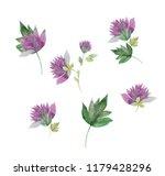 set of spring field clover... | Shutterstock . vector #1179428296