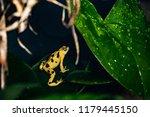 critically endangered... | Shutterstock . vector #1179445150