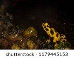 critically endangered... | Shutterstock . vector #1179445153