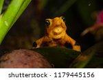 critically endangered... | Shutterstock . vector #1179445156