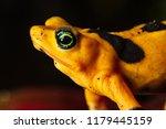critically endangered... | Shutterstock . vector #1179445159